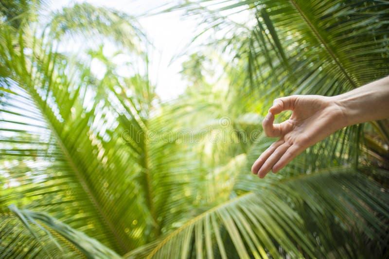 Naturligt slut upp handen av kvinnan som g?r yoga i gyan fingerposition f?r mudra som in isoleras p? h?rlig tropisk naturbakgrund fotografering för bildbyråer