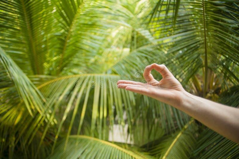 Naturligt slut upp handen av kvinnan som g?r yoga i gyan fingerposition f?r mudra som in isoleras p? h?rlig tropisk naturbakgrund arkivfoto
