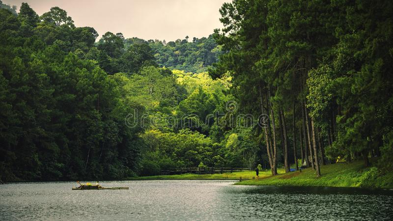 Naturligt vila ställe med träd och floder arkivbilder