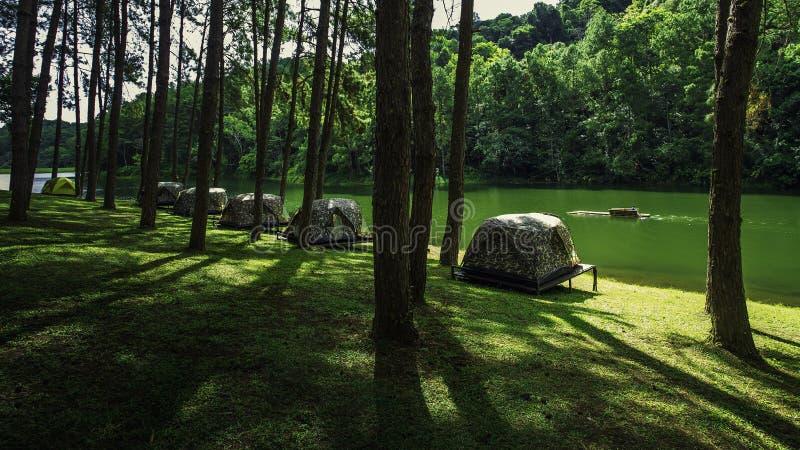 Naturligt vila ställe med träd och floder royaltyfri foto
