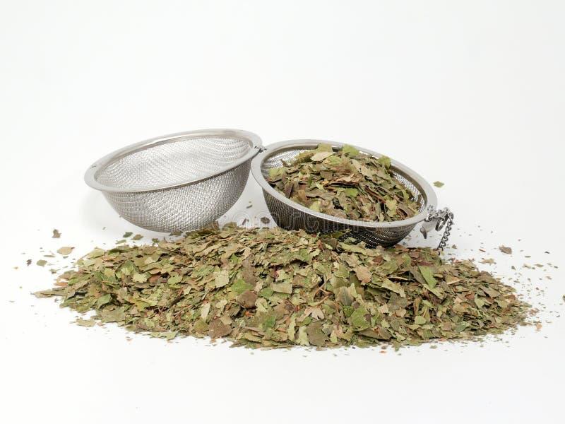 Naturopathy, folhas secadas do vidoeiro imagem de stock royalty free
