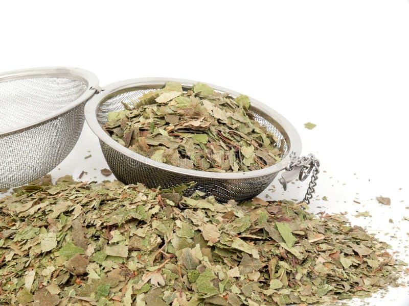 Naturopathy, hojas secadas del abedul imagen de archivo