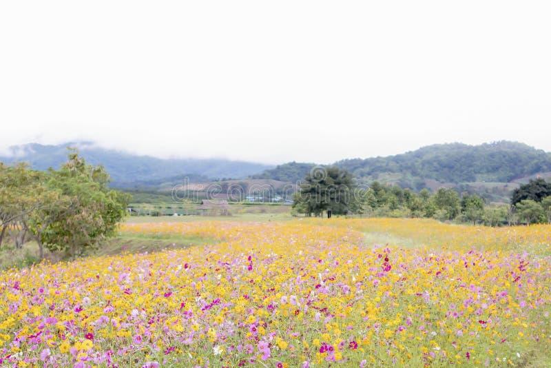 Naturpanorama-Landschaftsansicht des schönen und bunten Gänseblümchenblumenfeldes in der Landschaft lizenzfreies stockfoto