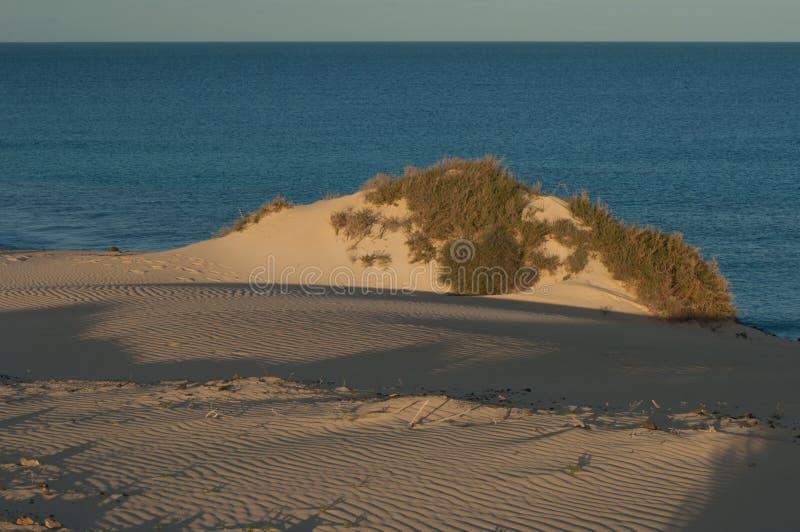 Naturpark der Sanddünen von Corralejo stockfotos