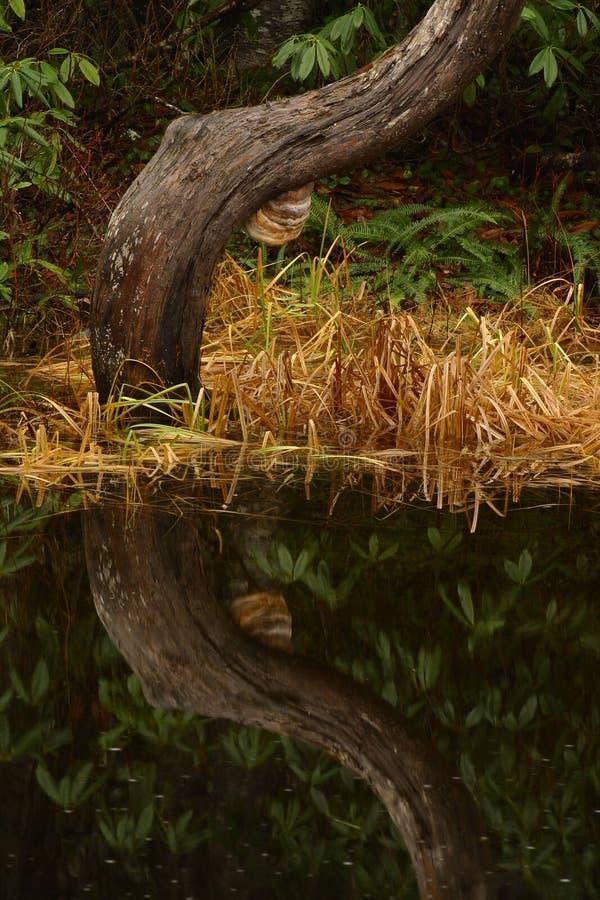 Naturportraits lizenzfreies stockfoto