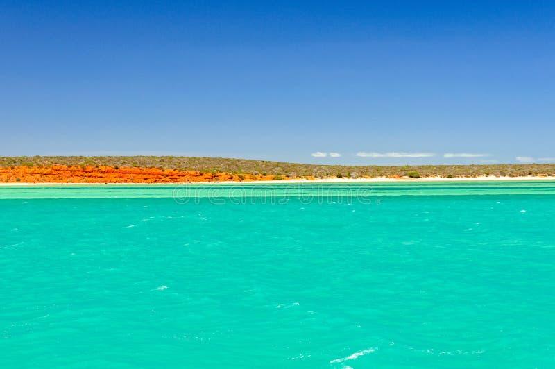 Naturs färger - apa Mia fotografering för bildbyråer