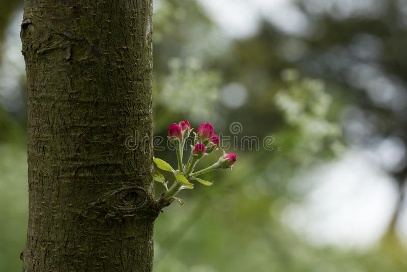 Naturs lilla bukett royaltyfri foto