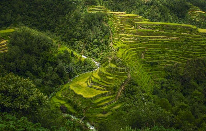 Naturs terrasser royaltyfri bild