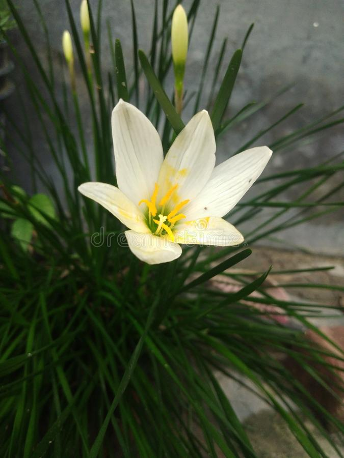 Naturschönheit von Blumen stockfotos