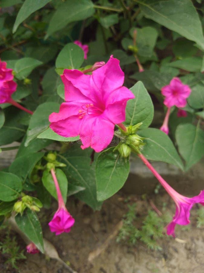 Naturschönheit von Blumen lizenzfreies stockbild