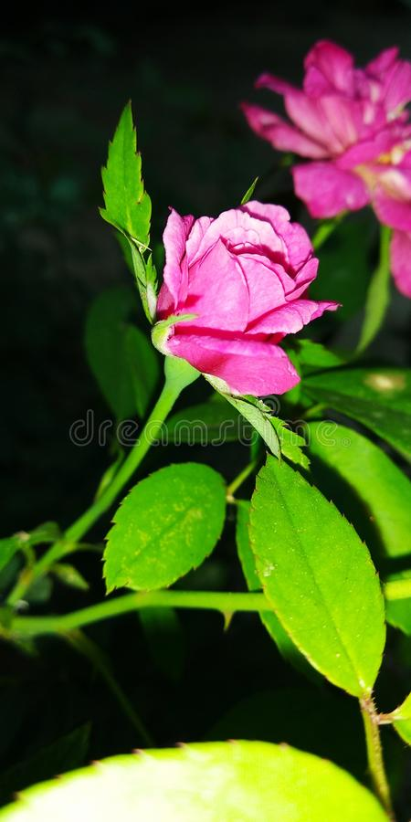 Naturschönheitsblumen-Grünblatt stockfotos