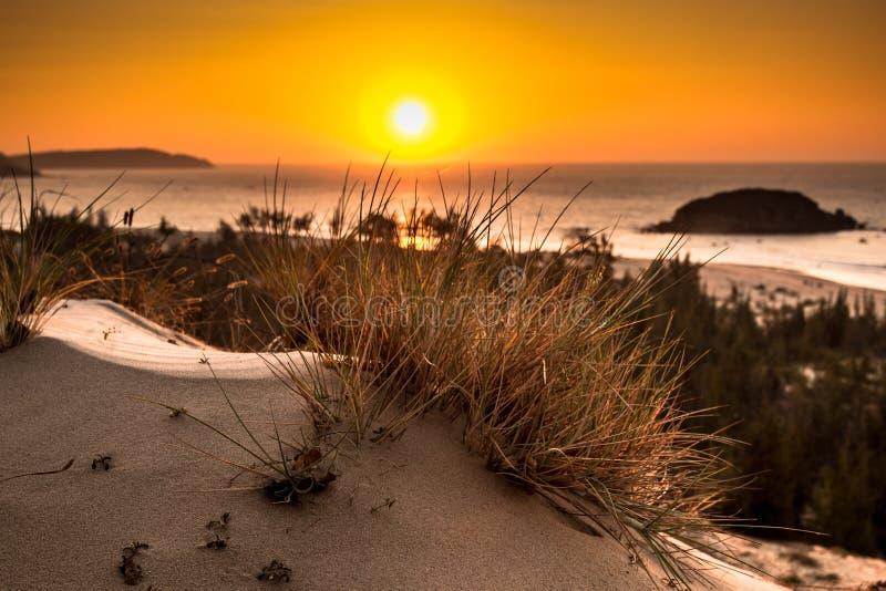 NaturSeascape med sikt av den glödande solen till och med en lösa Bush på ursnygg orange soluppgång