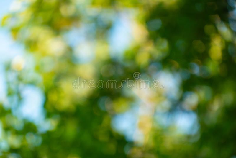 Natursikt av det gröna bladet på suddig bakgrund i trädgårdväxt royaltyfria bilder