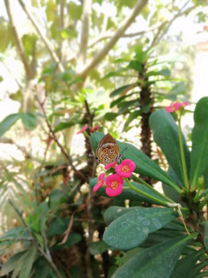 Naturskönhet royaltyfri foto