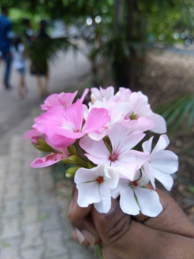Naturskönhet, blommor, stående royaltyfria foton