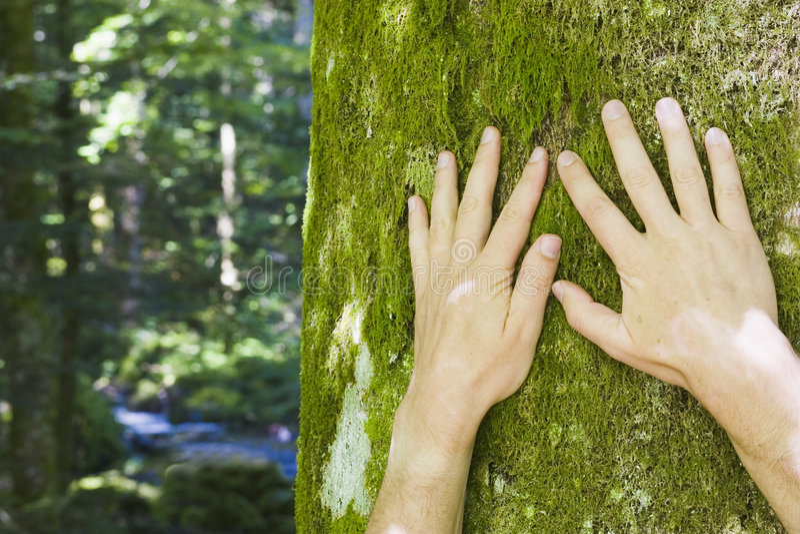 naturskydd royaltyfria foton
