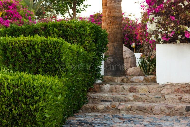 Natursteinschritte und -weg, die im grünen Garten landschaftlich gestalten lizenzfreie stockbilder