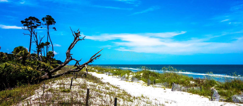 Naturszenen um Jagdinsel South Carolina lizenzfreies stockfoto