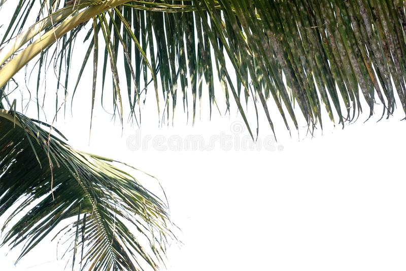 Naturträdsblad med isolerat kopieringsutrymme fotografering för bildbyråer