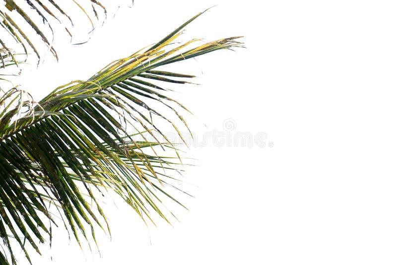 Naturträdsblad med isolerat kopieringsutrymme arkivbild