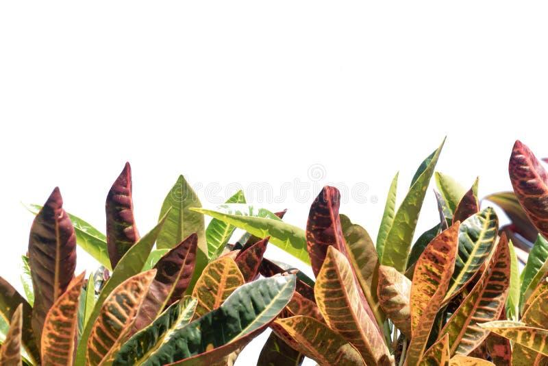 Naturträdsblad med isolerat kopieringsutrymme arkivbilder