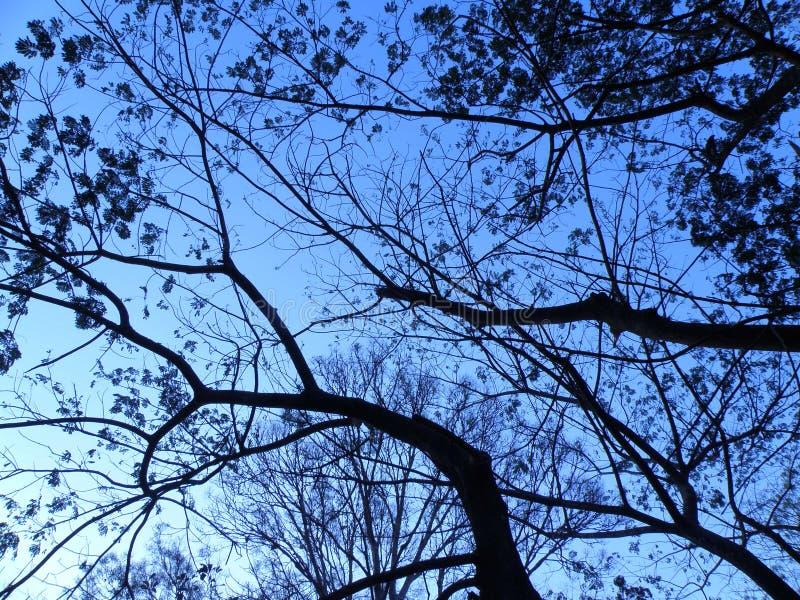 naturtree arkivfoton