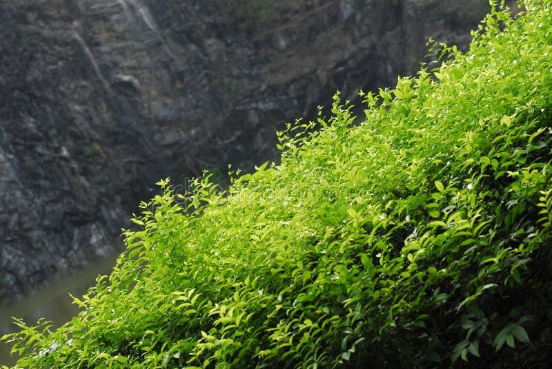 naturtrees arkivbild