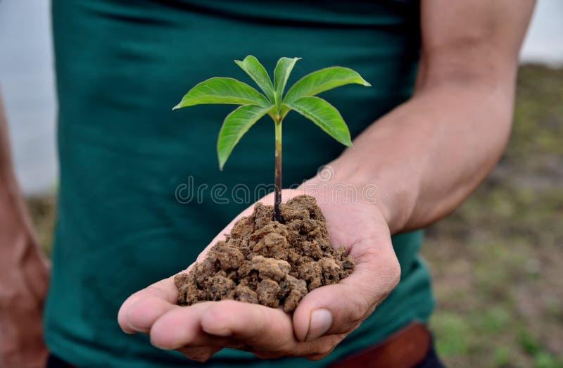Naturväxter i handholdindbegrepp royaltyfria foton