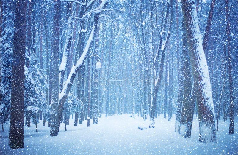Naturvinterlandskap Den härliga sikten av dentäckte gränden av staden parkerar på en vinterdag Parkera under ett snöfall sceniskt arkivfoto
