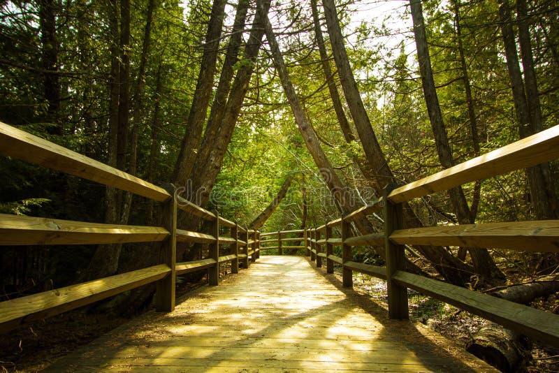 Naturweg im Wald stockbild