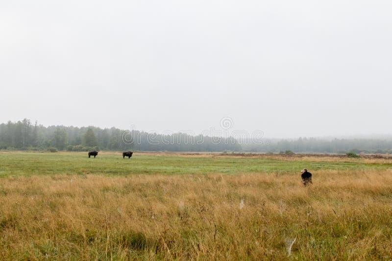 Naturwissenschaftlerphotograph versteckt im Gras mit Teleobjektiv lizenzfreie stockfotografie