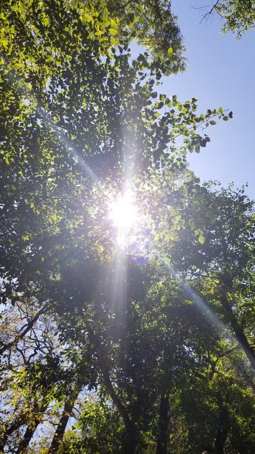 Natury światło fotografia royalty free