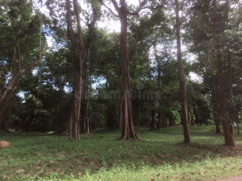 Natury Angkor Wat świątynia obrazy stock