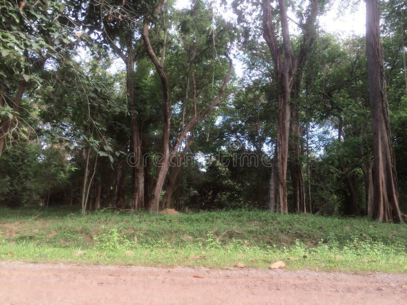 Natury Angkor Wat świątynia fotografia stock
