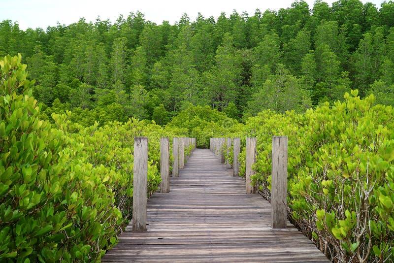 Natury boardwalk przez jaskrawego - zielenieje Pobudzającego Namorzynowego lub Indiańskiego Namorzynowego las Rayong prowincja w  zdjęcie stock