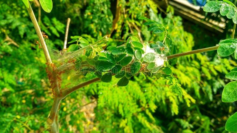 Natury drzewa popołudnie zdjęcia stock