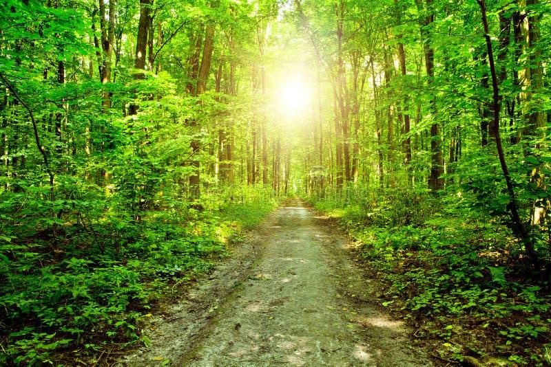 Natury drzewo zdjęcie royalty free