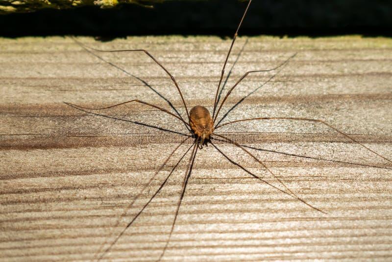 Natury, faun i insekta pojęcie, obraz stock