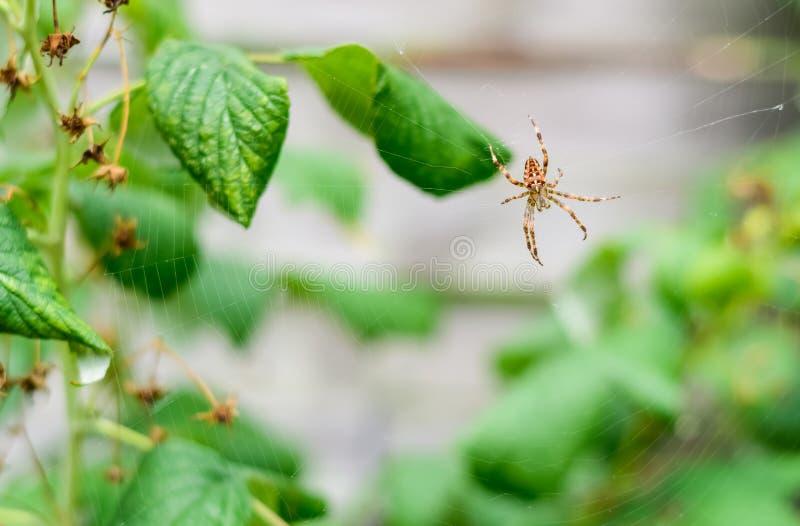 Natury, faun i insekta pojęcie, zdjęcia royalty free