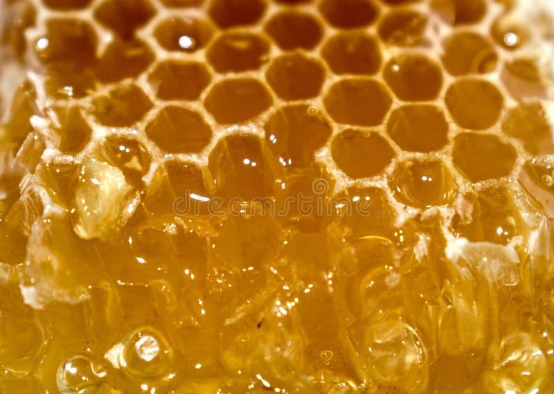 Natury honeycomb od którego miodowi przepływy fotografia stock