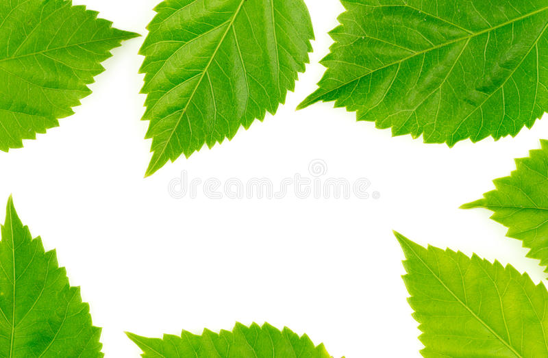 Natury jedzenia rama z świeżymi zielonymi liśćmi zdjęcie stock