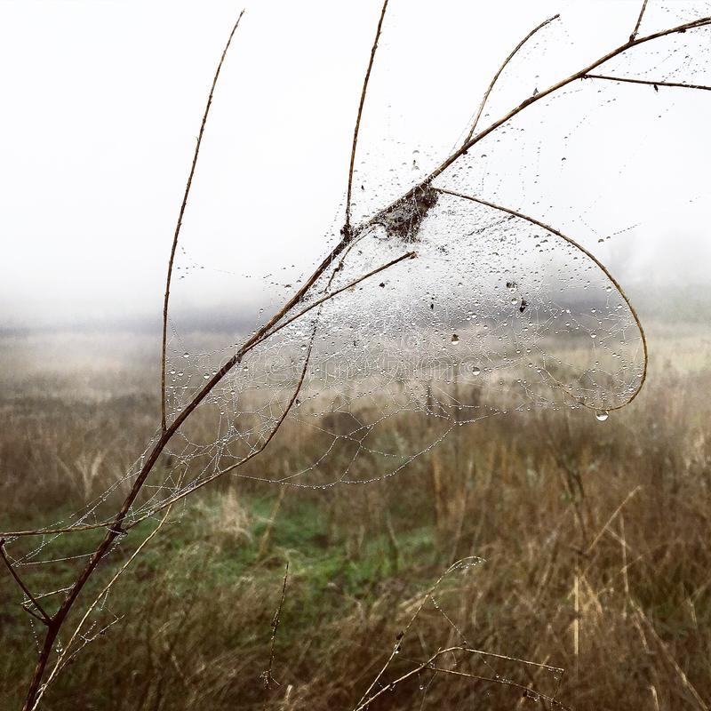 Natury jesieni rosy ranku sieć obrazy royalty free