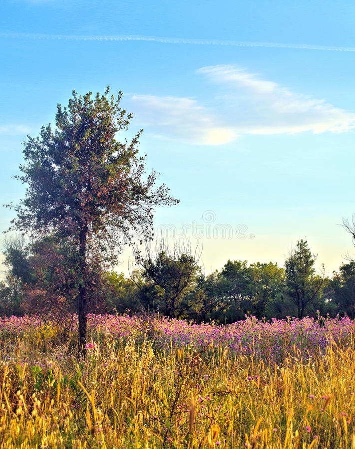 Natury landsape zdjęcie stock