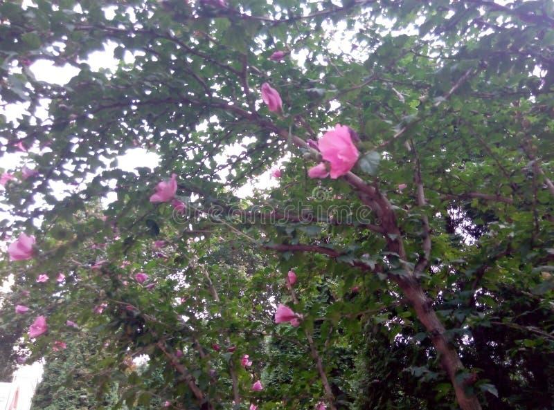 natury lata rośliny fotografia royalty free