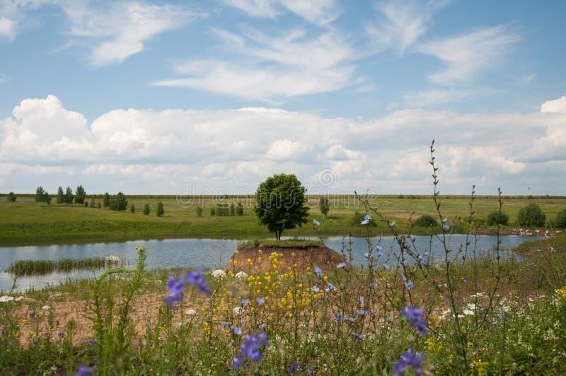 Natury lato w rosjaninie, piękny drzewo fotografia royalty free