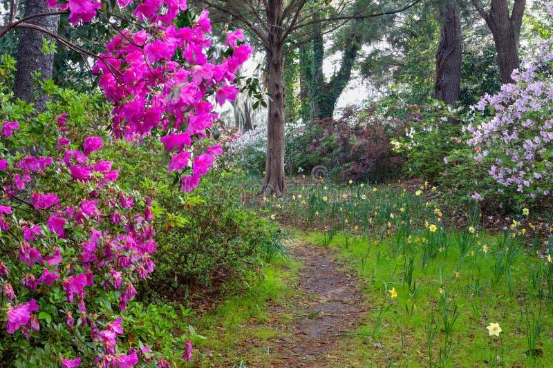 Natury Ogrodowa grota Charleston Południowa Karolina obrazy royalty free