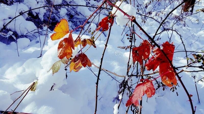 Natury piękno zdjęcie stock