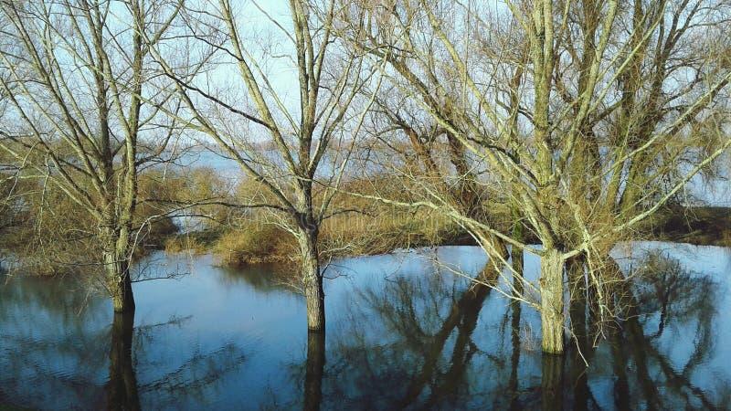 Natury piękno, woda, drzewo zdjęcia stock