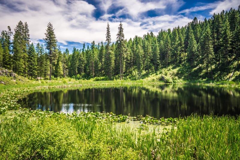 Natury scenics woko?o Spokane rzeki Washington obrazy stock