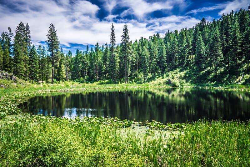 Natury scenics woko?o Spokane rzeki Washington fotografia stock